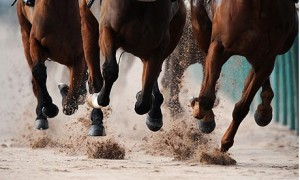 Horse-Racing-Southwell