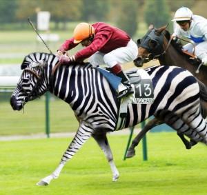 zebra-win1