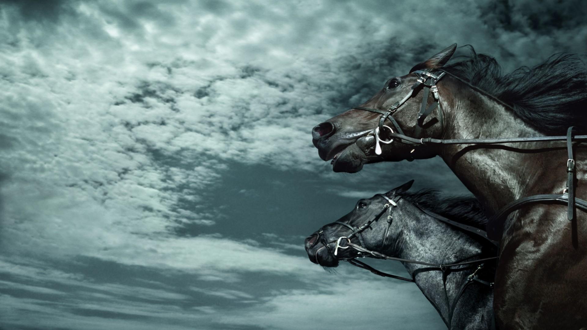 Three Horse Race
